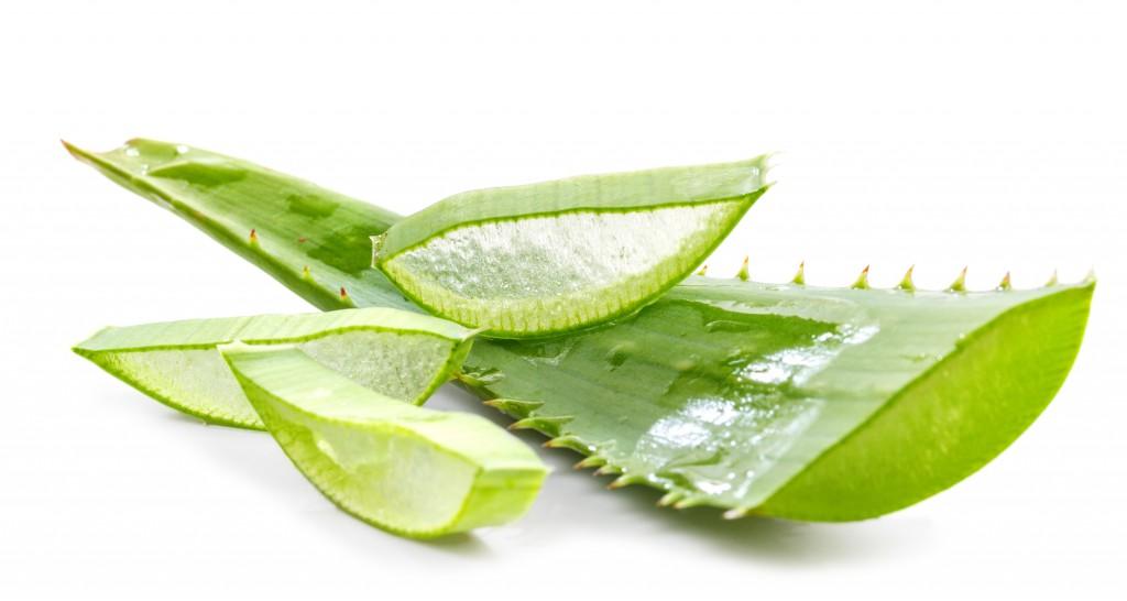 Ein vielfach bewährtes Hausmittel bei leichten Verbrennungen bildet Aloe vera. (Bild: g215/fotolia.com)