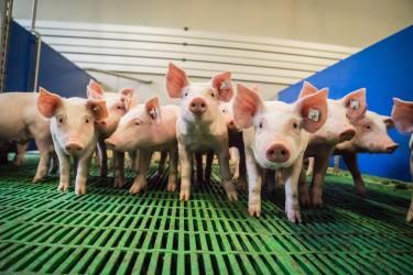 Der Antibiotika-Einsatz in der Tierhaltung ist leicht zurückgegangen. (Bild: countrypixel/fotolia.com)