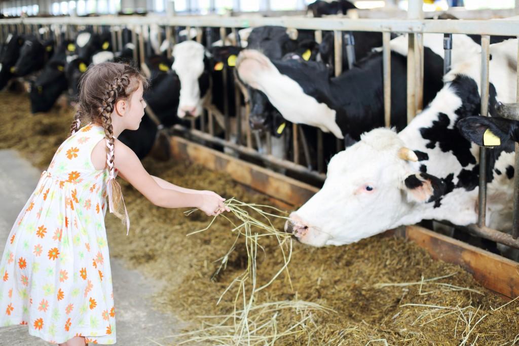 Regelmäßiger Kontakt mit Stallstaub in der frühen Kindheit behebt genetisch erhöhtes Asthma-Risiko- (Bild: Pavel Losevsky/fotolia.com)