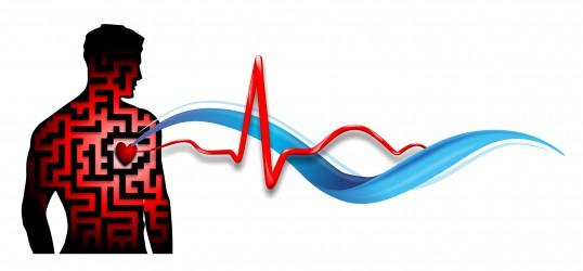 Deutschlandweit informieren Experten im Rahmen der Herzwochen zu Herzkrankheiten und Möglicheiten der Prävention. (Bild: Fiedels/fotolia.com)