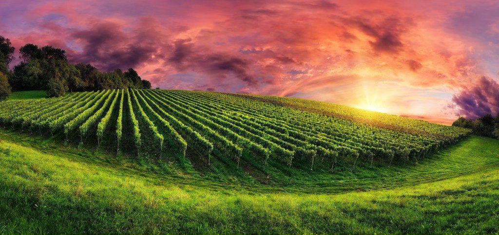 Studien: Eine malerische Landschaft wirkt positiv auf unsere Gesundheit