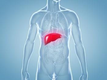 Die beeinträchtigte Leberfunktion bei einer Leberzirrhose kann durch Probiotika wieder verbessert werden. (Bild: ag visuell/fotolia.com)