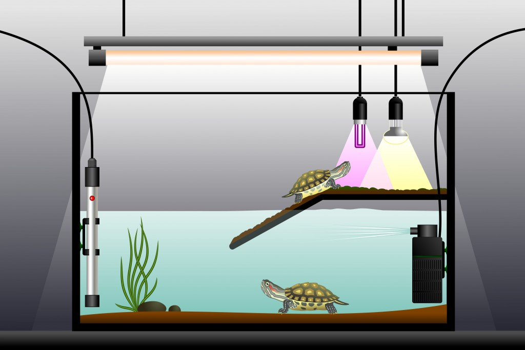 Die Sauberkeit eines Terrariums ist äußerst wichtig, um Erkrankungen zu vermeiden. Bild: Vladimir Zadvinskii - fotolia
