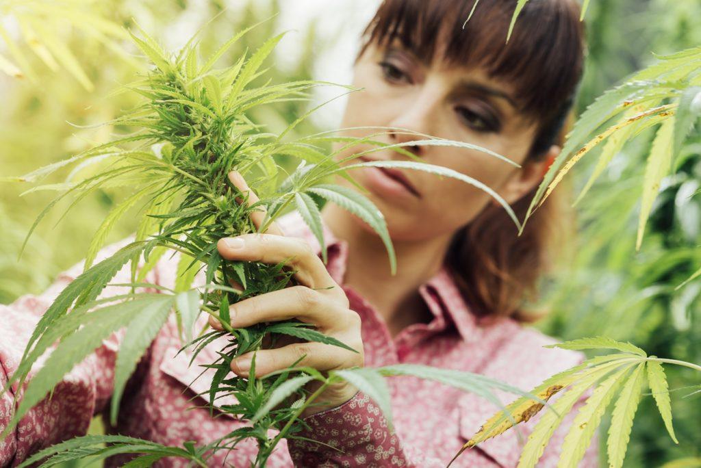 Zustimmung für Cannabis innerhalb eines Jahres stark gestiegen. Bild: stokkete - fotolia