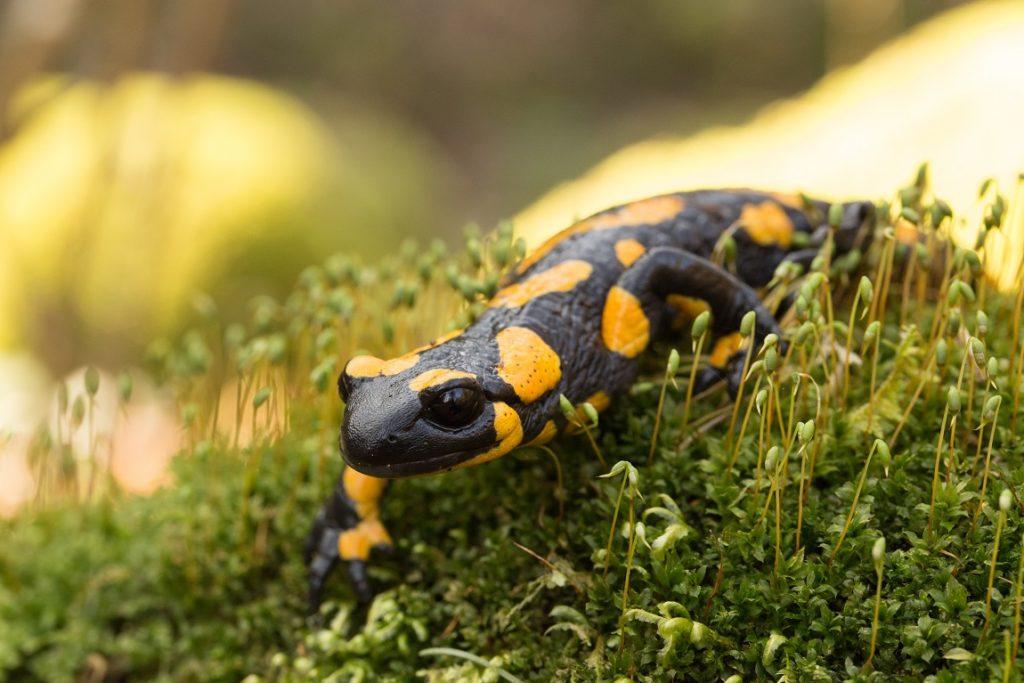 Exotische Heimtiere: Diese Erkrankungen können auftreten. Bild: Bene - fotolia