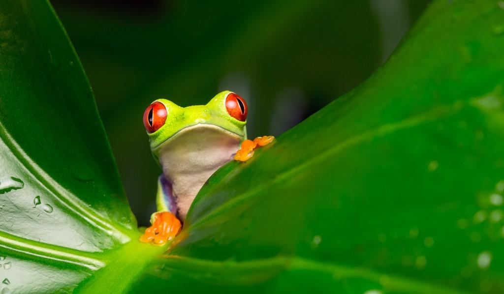 Heilende Tiere im Urwald. Bild: mbridger68 - fotolia