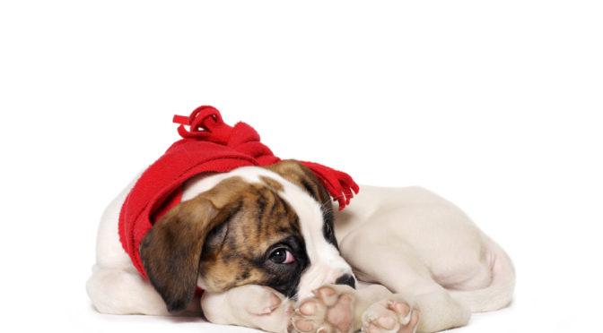 Hunde, Katzen & Hamster: Handeln wenn sich unsere..