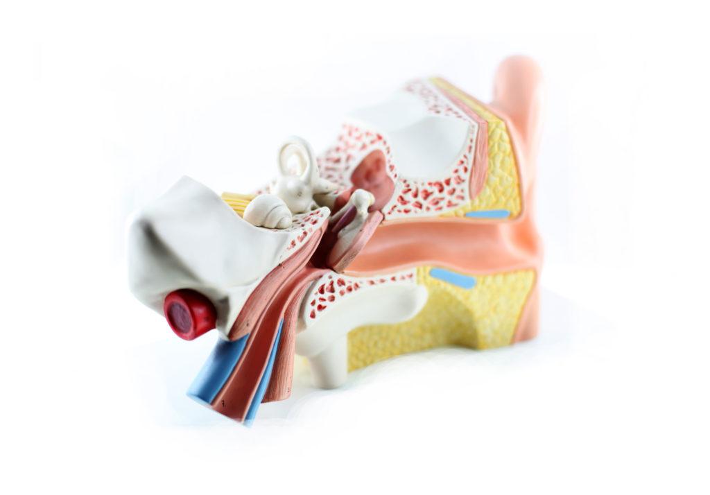 Mittelohrentzündung kann taub machen. Bild: Peter Atkins - fotolia