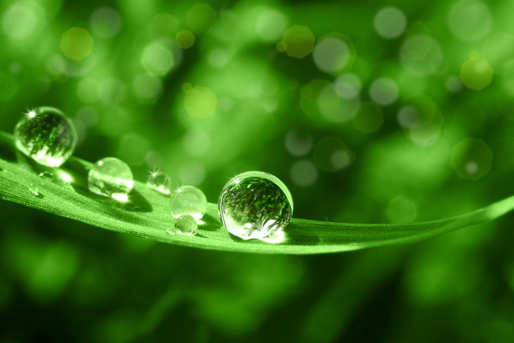 Die natürliche Medizin aus dem Regenwald. Bild: Stefan Körber - fotolia