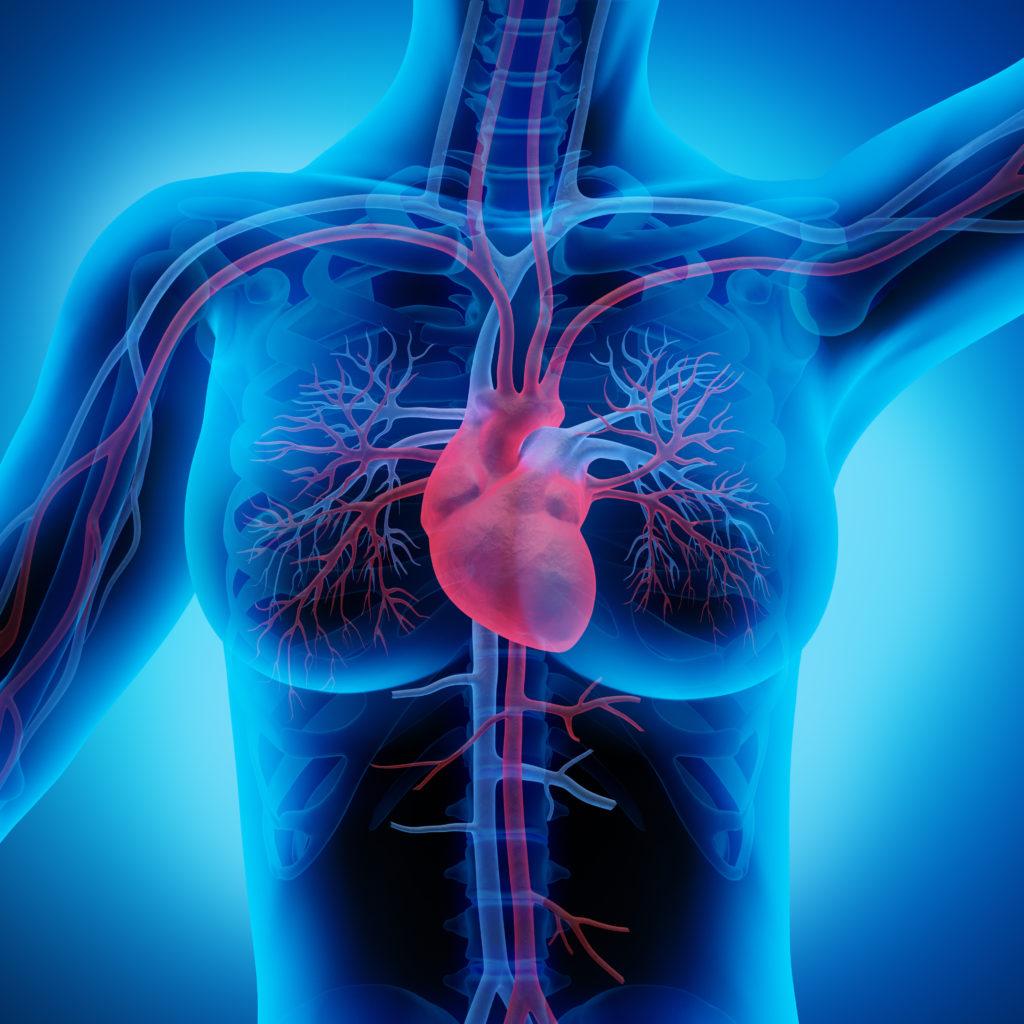 Eine kranhafte Verdickung des Herzmuskels kann zu Herzschwäche mit tödlicher Folge führen. (Bild: psdesign1/fotolia.com)