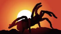 Spinnenphobie könnten künftig möglicherweise deutlich schneller behandelt werden. (Bild: pict rider/fotolia.com)