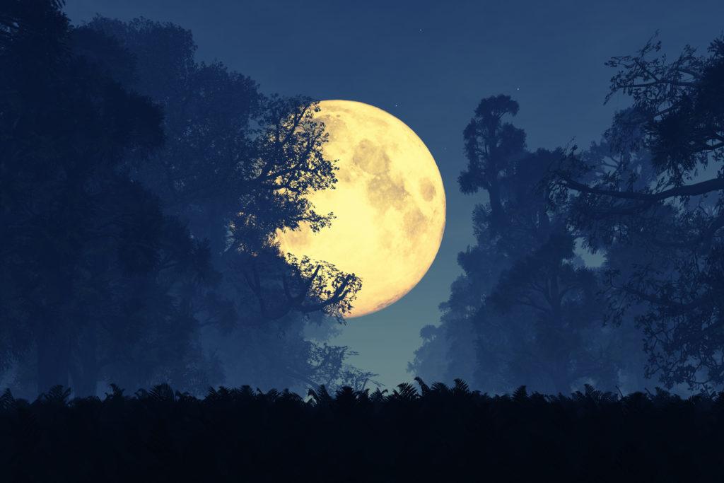 Mystische Träume. Bild: boscorelli - fotolia