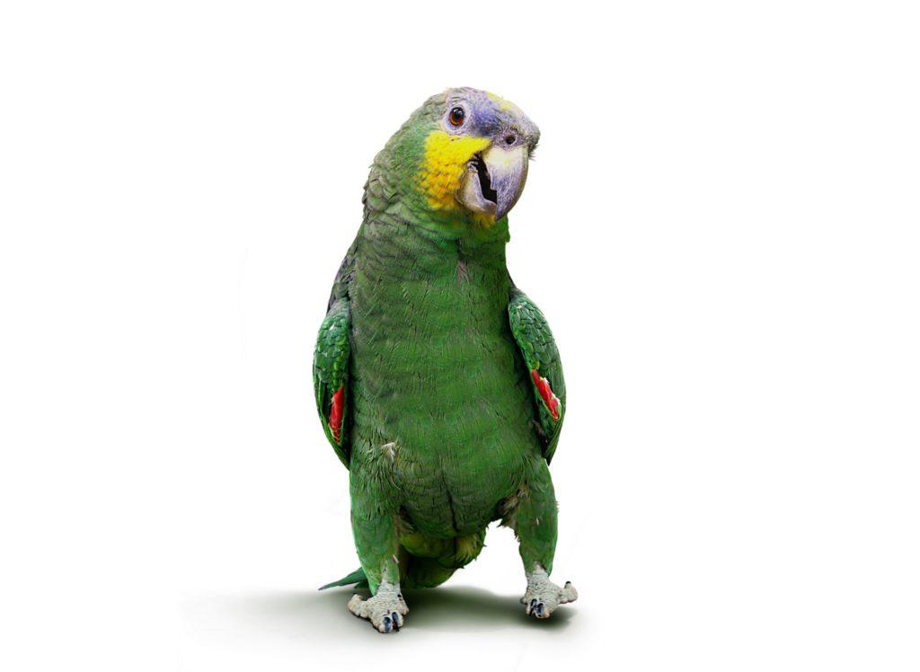 Erkrankungen bei Vögeln erkennen. Bild: razihusin - fotolia