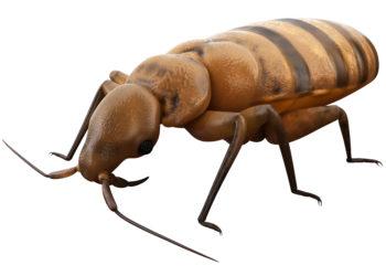 Viele Bettwanzen haben Resistenzen gegen Pestizide entwickelt und sind daher nur noch schwer zu beseitigen. (Bild: Sebastian Kaulitzki/fotolia.com)
