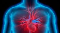Bei einer krankhaften Verdickung des Herzmuskels ist das Risiko eines plötzlichen Herztodes deutlich erhöht. (Bild: psdesign1/fotolia.com)