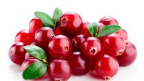 Cranberrys schützen die Blase. Bild: Tim UR - fotolia