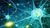 Erinnerungsfunktion unseres Gehirns. Bild: adimas - fotolia