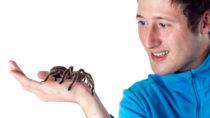 Sehr verbreitet: Angst vor Spinnen. Die Eltern geben die Angst an die Kinder weiter. Bild: © Michael Schütze - fotolia