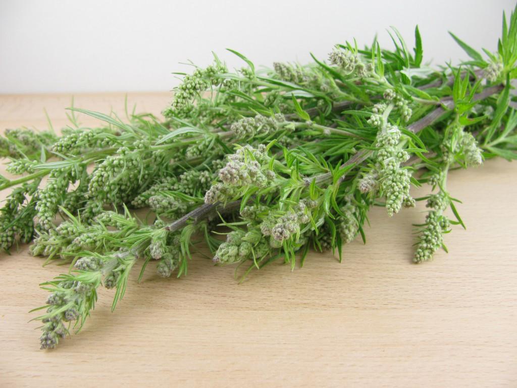 Der Beifuß (Artemisia vulgaris) wurde traditionell viel in der Frauenmedizin eingesetzt. (Bild: katharinarau/fotolia.com)
