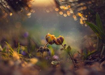 Um vieleHeilpflanzen ranken sich Mythen, die auch in dem Namen der Gewächse Ausdruck finden. (Bild: naumenkoe/fotolia.com)