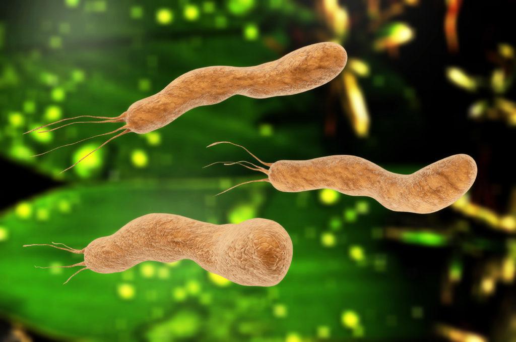 Infektionen mit Helicobacter pylori haben im menschlichen Organismus auch positive Effekte. (Bild: fotoliaxrender/fotolia.com)