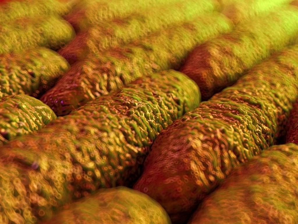 Milzbrand Bakterien zählen zu den besonders gefürchteten biolgischen Waffen. (Bild: royaltystockphoto/fotolia.com)