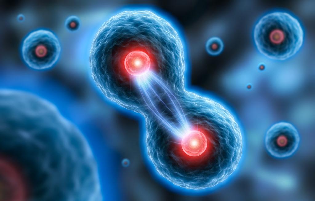 Im Labor haben Wissenschaftler aus Hautprobe Stammzellen entwickelt und aus diesen ein künstliches Mini-Gehirn geschaffen. (Bild: psdesign1/fotolia.com)