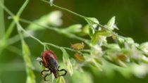 Eine Behandlung mit Antibiotika hilft nicht bei einer Lyme-Borreliose. Die Therapie bringt aber unerwünschte Nebenwirkungen mit sich. (Bild: Michael Tieck/fotolia.com)