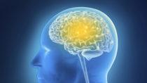 ZNS-Lymphome sind besonders schwer zu behandelnde, aggressive Hirntumore, gegen die nun ein neuer Therapieansatz getestet wurde. (Bild: adri76/fotolia.com)