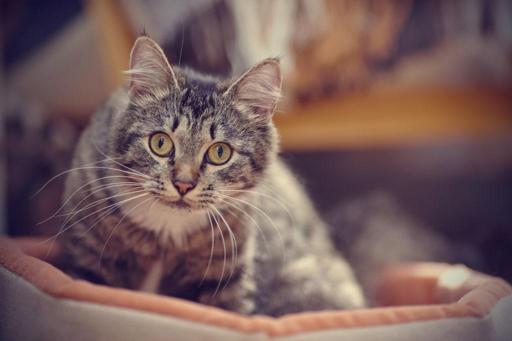 katzen zeigen zuneigung