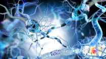 Durch spezielle Pflanzenpetide lässt sich die Zerstörung der Nervenfasern bei MS möglicherweise stoppen. (Bild: ralwel/fotolia.com)