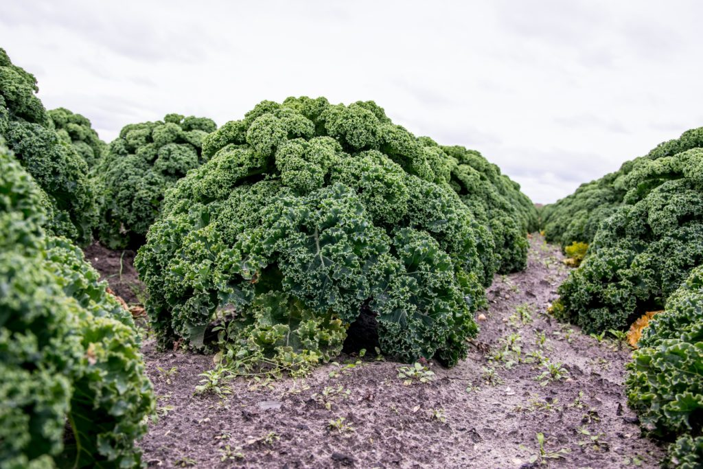 Auch heimische Gemüsesorten wie Grünkohl können durchaus als Superfood bezeichnet werden. (Bild: arjenschippers/fotolia.com)