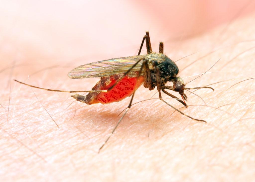 Das Zika-Virus kann nach neuesten Erkenntnissen auch das Gehirn von Erwachsenen schwer schädigen. (Bild: Kletr/fotolia.com)