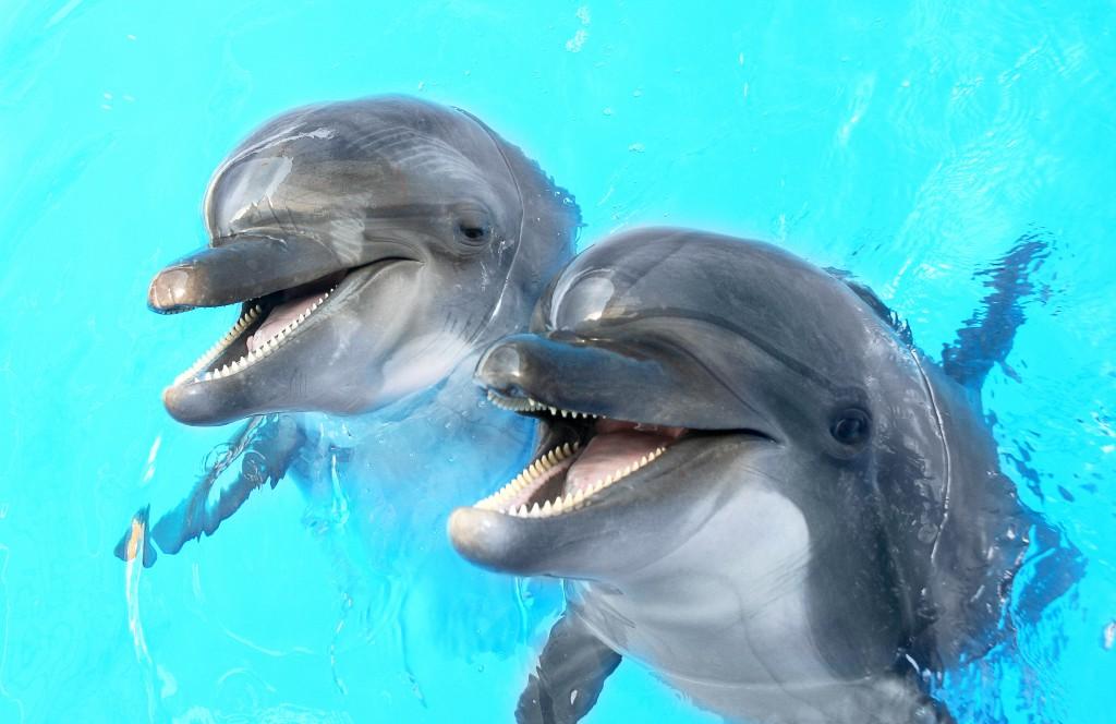 Eine vor allem bei Kindern sehr beliebte aber eher teure Therapie ist die mit Delphinen. Bild: Aleksandr Lesik - fotolia