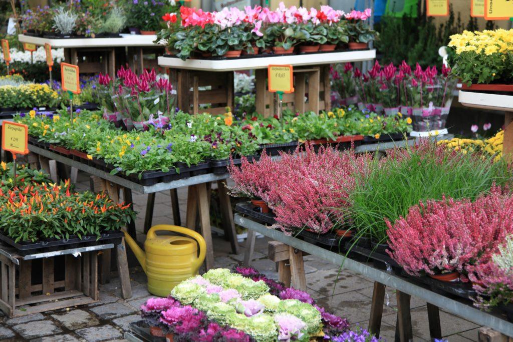 Achtung beim Pflanzenkauf. Bild: Jeanette Dietl - fotolia