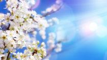 Nach den langen Wintermonaten lädt das wärmere Wetter zu Aufenthalten im Freien ein. Doch Vorsicht: Die Frühlingssonne wird oft unterschätzt. Es droht ein Sonnenbrand. (Bild: Romolo Tavani/fotolia.com)