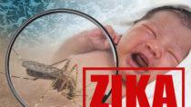 Eine Infektion mit dem Zika-Virus während der Schwangerschaft kann zu Schädelfehlbildungen beim ungeborenen Kind führen. (Bild: airdone/fotolia.com)