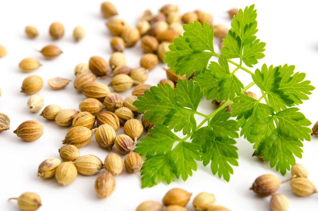 Koriander enthält wertvolles ätherisches Öl, durch welches Magenkrämpfe gelindert werden können. (Bild: emuck/fotolia.com)