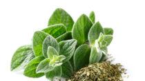 Trocknen verstärkt das Oregano-Aroma. Bild: Dionisvera - fotolia