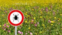 Zecken können gefährliche Infektionskrankheiten übertragen. Das Landesgesundheitsamt Baden-Württemberg rät Personen, die viel im Grünen unterwegs sind, zur Impfung gegen FSME. (Bild: Schlegelfotos/fotolia.com)