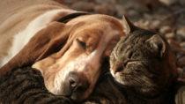 Auch Haustiere erkranken an Demenz.