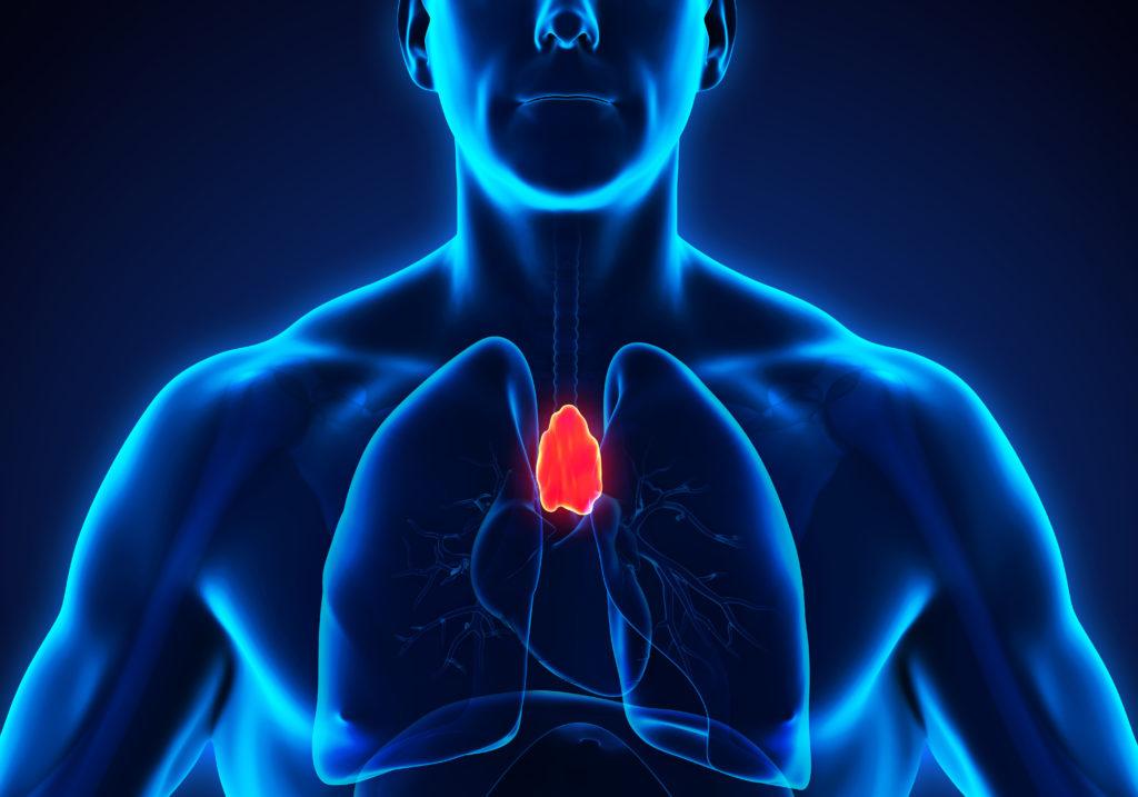 Die Thymusdrüse unterliegt im Lebensverlauf degenerativen Prozessen, die unter Umständen eine Tumorbildung mit sich bringen. (Bild: nerthuz/fotolia.com)