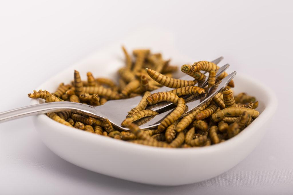 Insekten könnten in Zukunft als Futter- und Lebensmittel die Welternährung revolutionieren. (Bild: catherinelprod/fotolia.com)