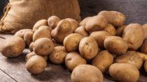 Kartoffeln gehören schon seit langer Zeit zu unseren Grundnahrungsmitteln. Die Knollen lassen sich auf viele verschiedene Arten verarbeiten und zubereiten. Somit bietet auch eine Nahrung reich an Kartoffeln trotzdem genügend Abwechslung. Allerdings scheint so eine Art der Ernährung negative Folgen für unseren Blutdruck zu haben. (Bild: dmitriygut/fotolia.com)