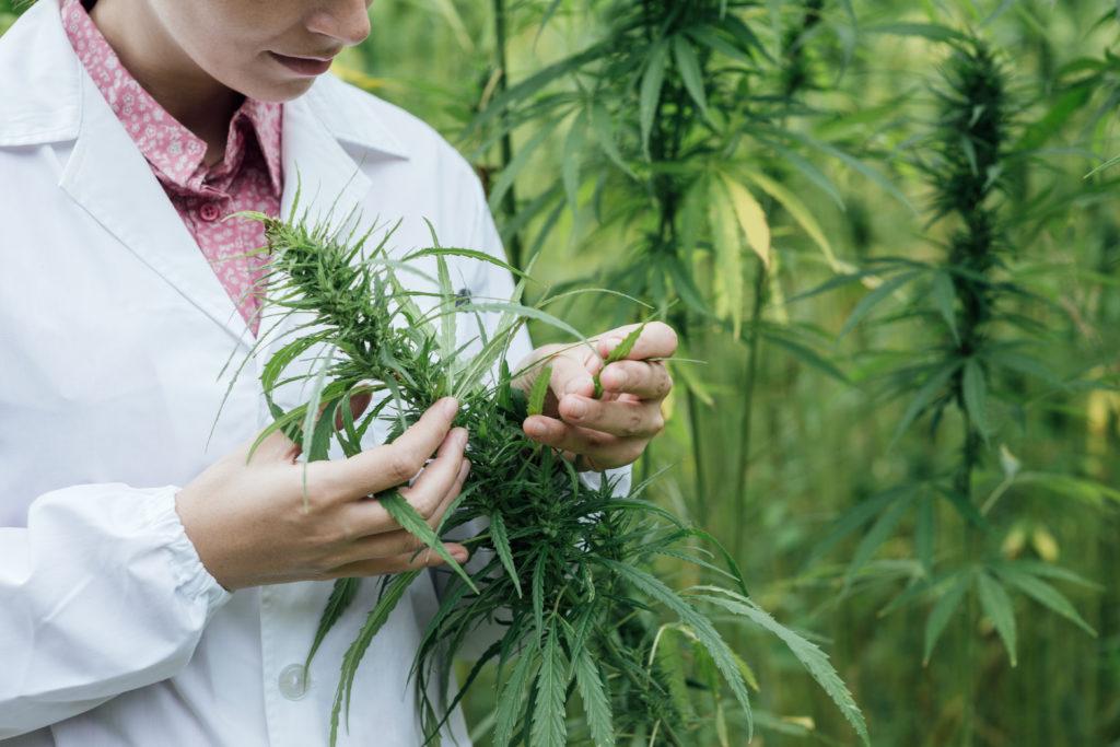 Neues Gesetz zum Einsatz von Cannabis in der Medizin. Bild: stokkete - fotolia