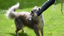 Hundebiss kein Arbeitsunfall. Bild: Grubärin - fotolia