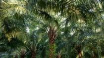 Ungesundes Palmöl befindet sich in jedem zweiten Lebensmittel. (Bild: ThKatz/fotolia.com)