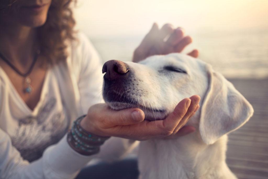 Hunde können eine chemische Verbindung riechen, die bei einer Unterzuckerung in unserer Atemluft vorhanden ist. So können ausgebildete Hunde Menschen mit Diabetes vor einer Unterzuckerung warnen. (Bild: cristina_conti/fotolia.com)