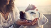 Hunde können eine Chemikalie riechen, die bei einer Unterzuckerung in unserer Atemluft vorhanden ist. Aus diesem Grund können ausgebildete Hunde Menschen mit Diabetes vor einer Unterzuckerung warnen. (Bild: cristina_conti/fotolia.com)