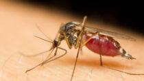 In Teilen Deutschlands droht eine Mückenplage. Auch wenn die Insekten keine gefährlichen Krankheiten übertragen, ist es sinnvoll, sich vor Stichen zu schützen. (Bild: corlaffra/fotolia.com)